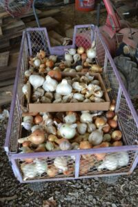 Sustainable Farming WNC