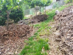 Compost and hugelkultur mounds with cherry and peach tree picture.