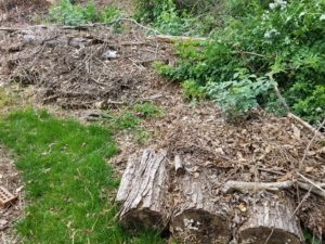 Compost filled Hugelkultur retainage keeps trees and brush on-site to rebuild topsoil, soaking up stormwater and reducing erosion.