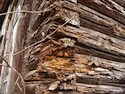 Rotten log wall picture