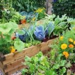 Compost water heating for raised bed vegetables picture