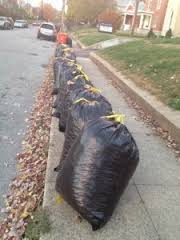 Picture of bagged leaves