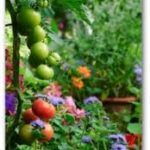 Picture of flowers and vegetables