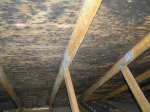 mold-growth-underside-roof-deck